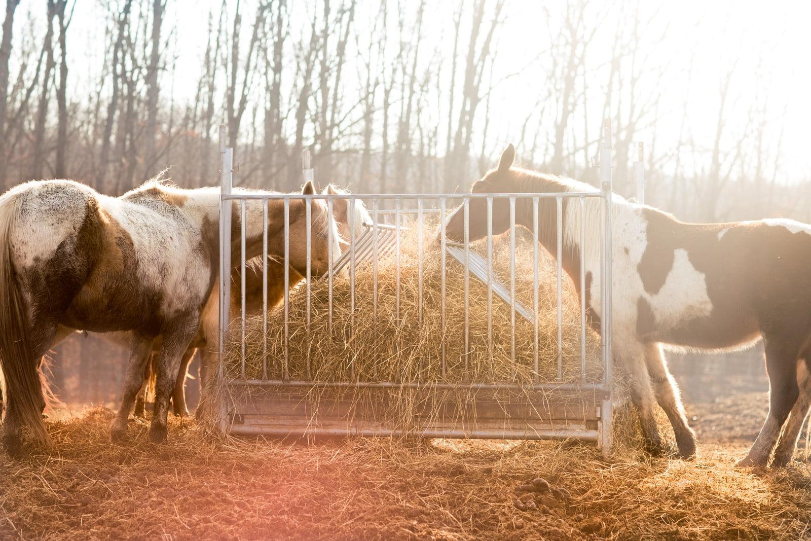 La verdad sobre la dieta equina: ¿qué comen los caballos?
