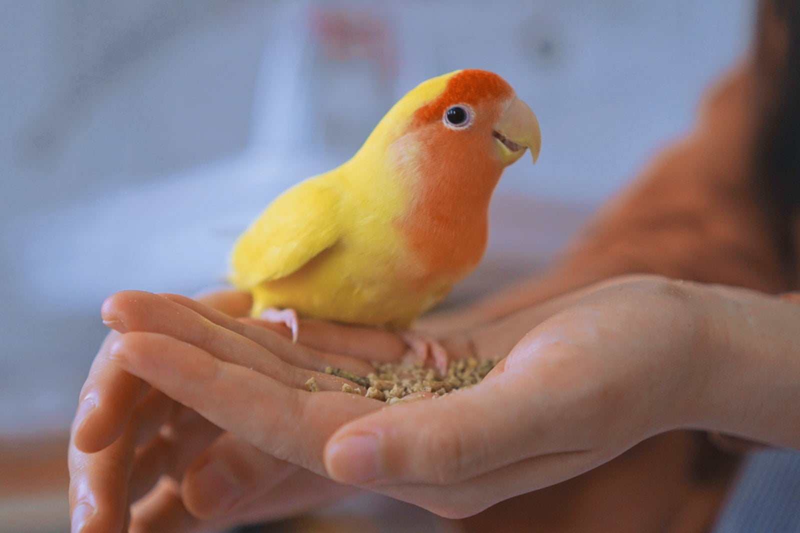 Cómo domesticar un loro - Qué hacer y qué no hacer para conquistar la confianza de tu pájaro