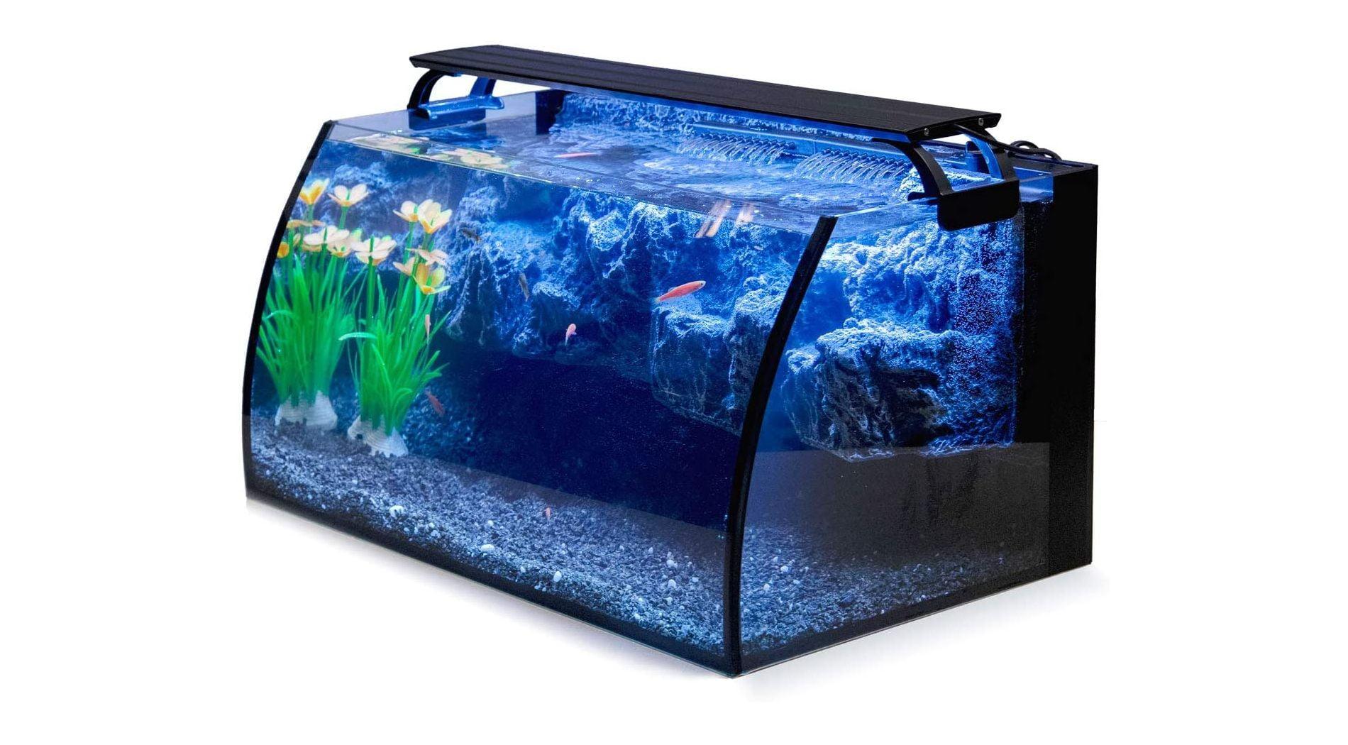 Mejores acuarios para peces Betta