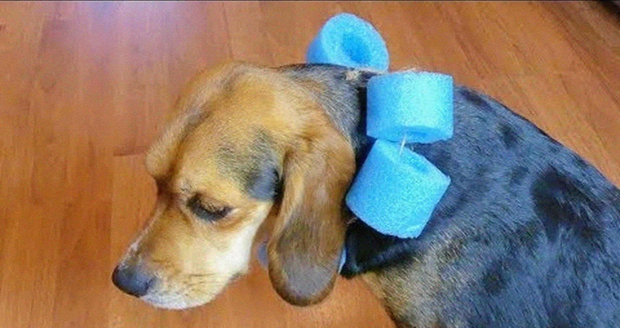 Collar isabelino casero para perro (diy): 7 proyectos simples 1