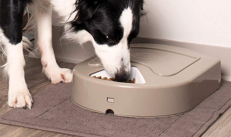 comederos automáticos para perros