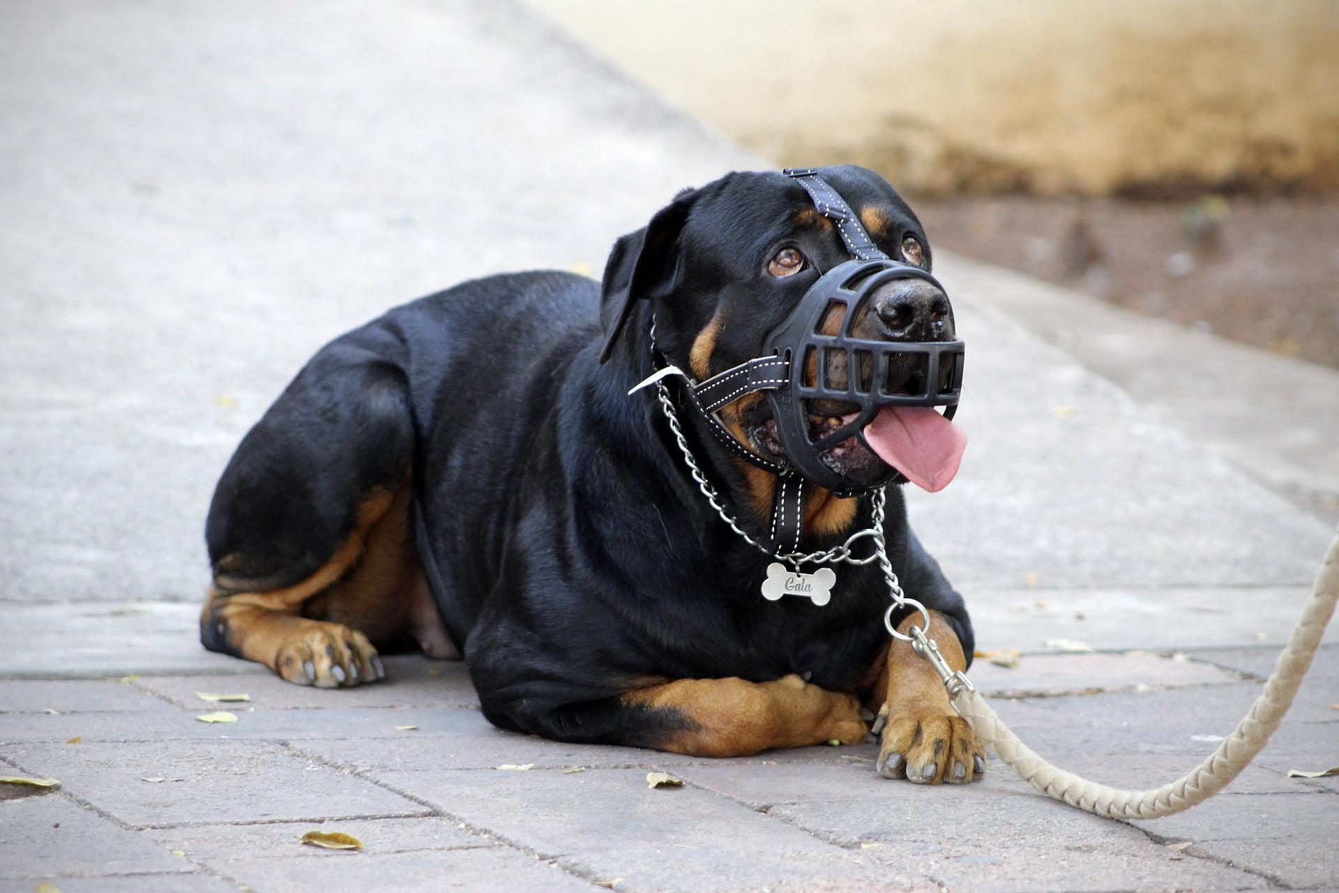 Entrenamiento de bozal para perros: respondemos sobre cómo, por qué y cuándo usar un bozal 1