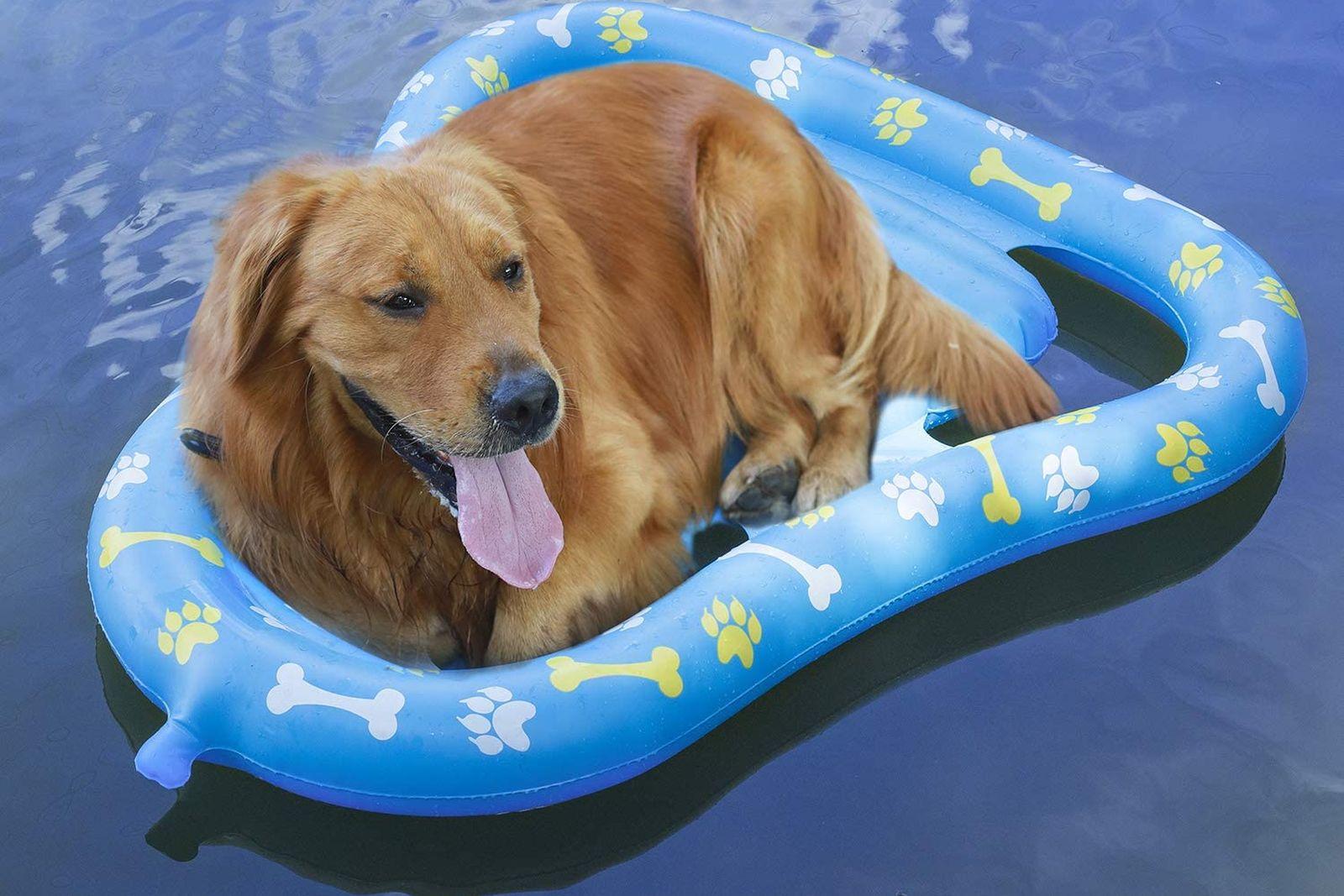 Los mejores flotadores para perros para la piscina [year] (análisis) 1