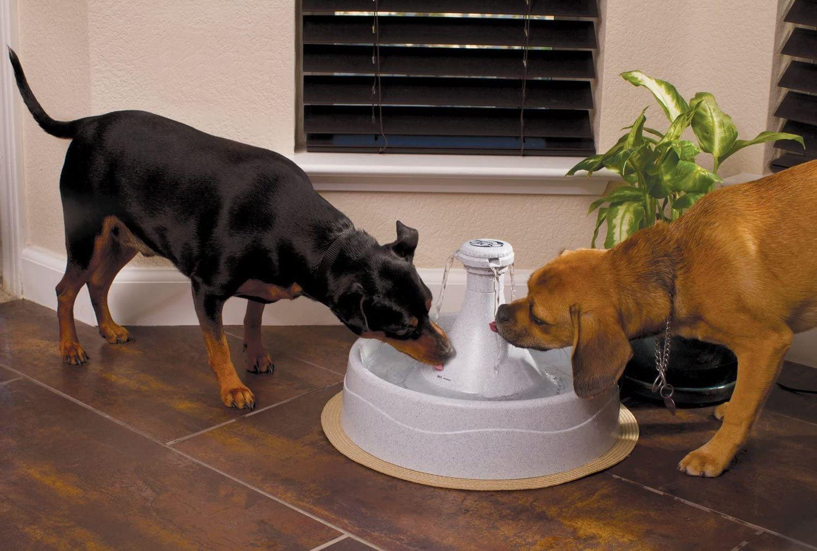 Las mejores fuentes de agua para perros [year] para mantenerlo hidratado 1