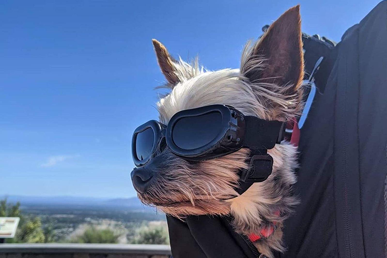 mejores gafas para perros