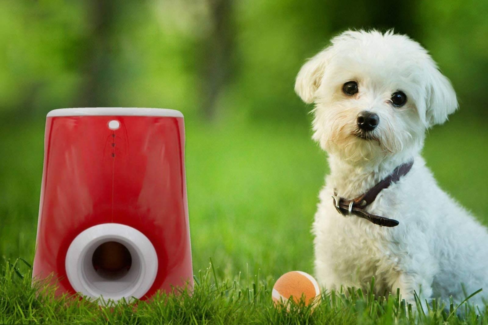 Mejores lanzadores de pelotas para perros [year] (análisis) 1