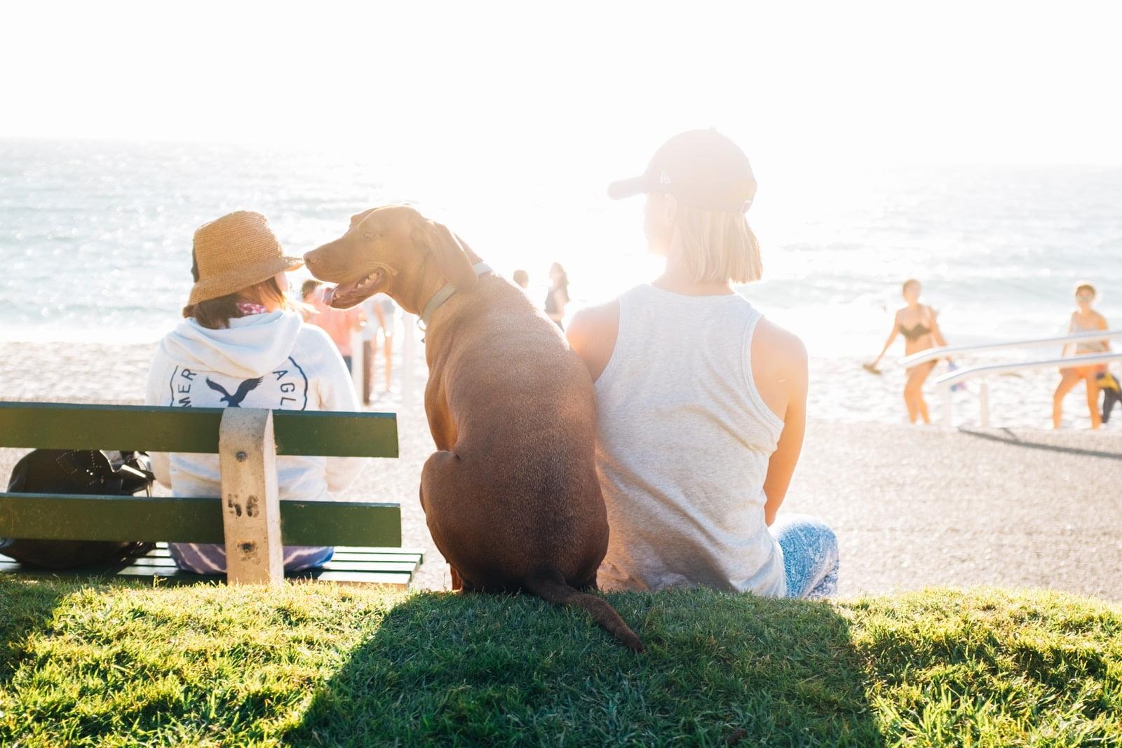 8 consejos para mantener fresco a tu perro en verano