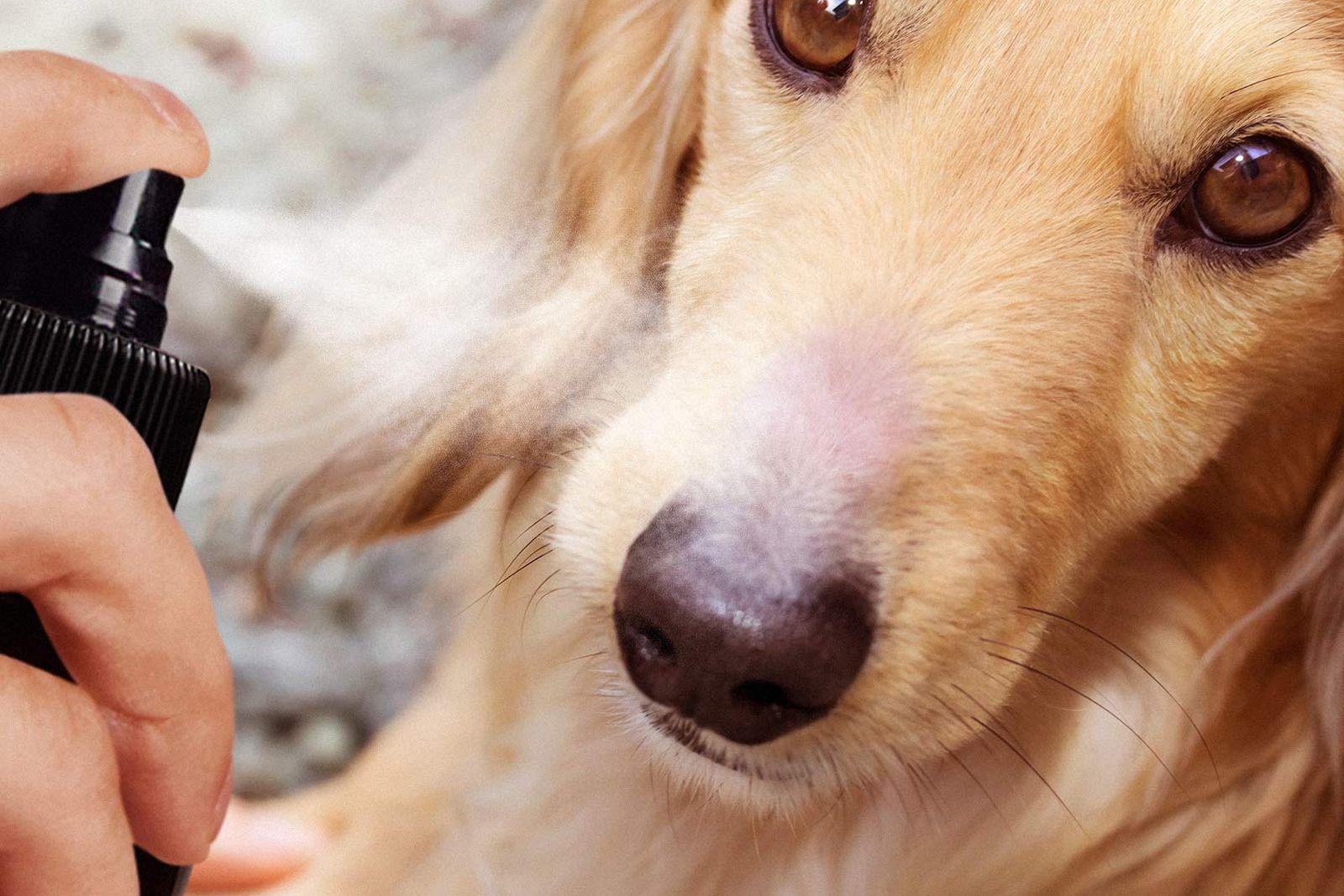 Mejores protectores solares para perros [year] (análisis) 1