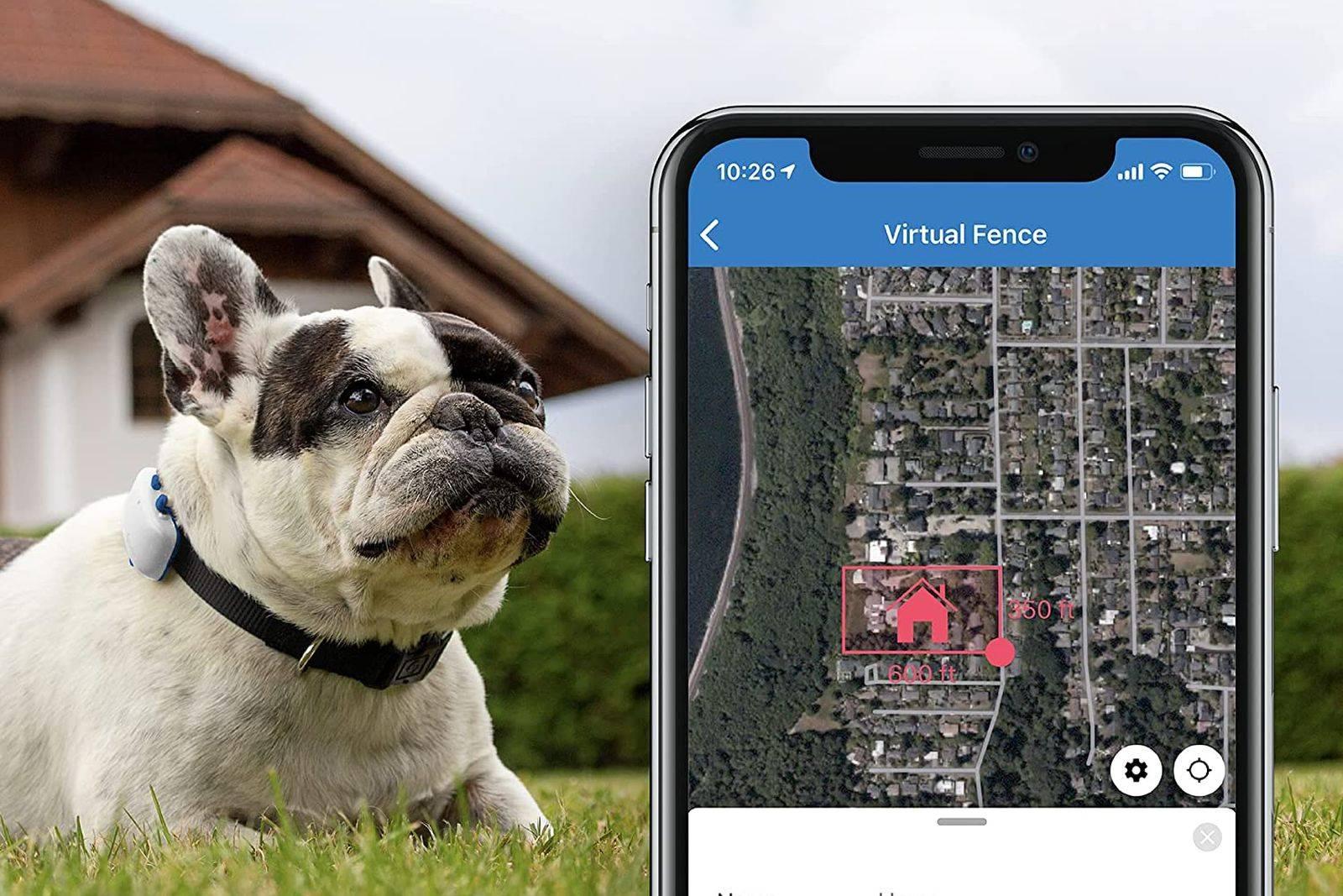 rastreadores GPS para perros