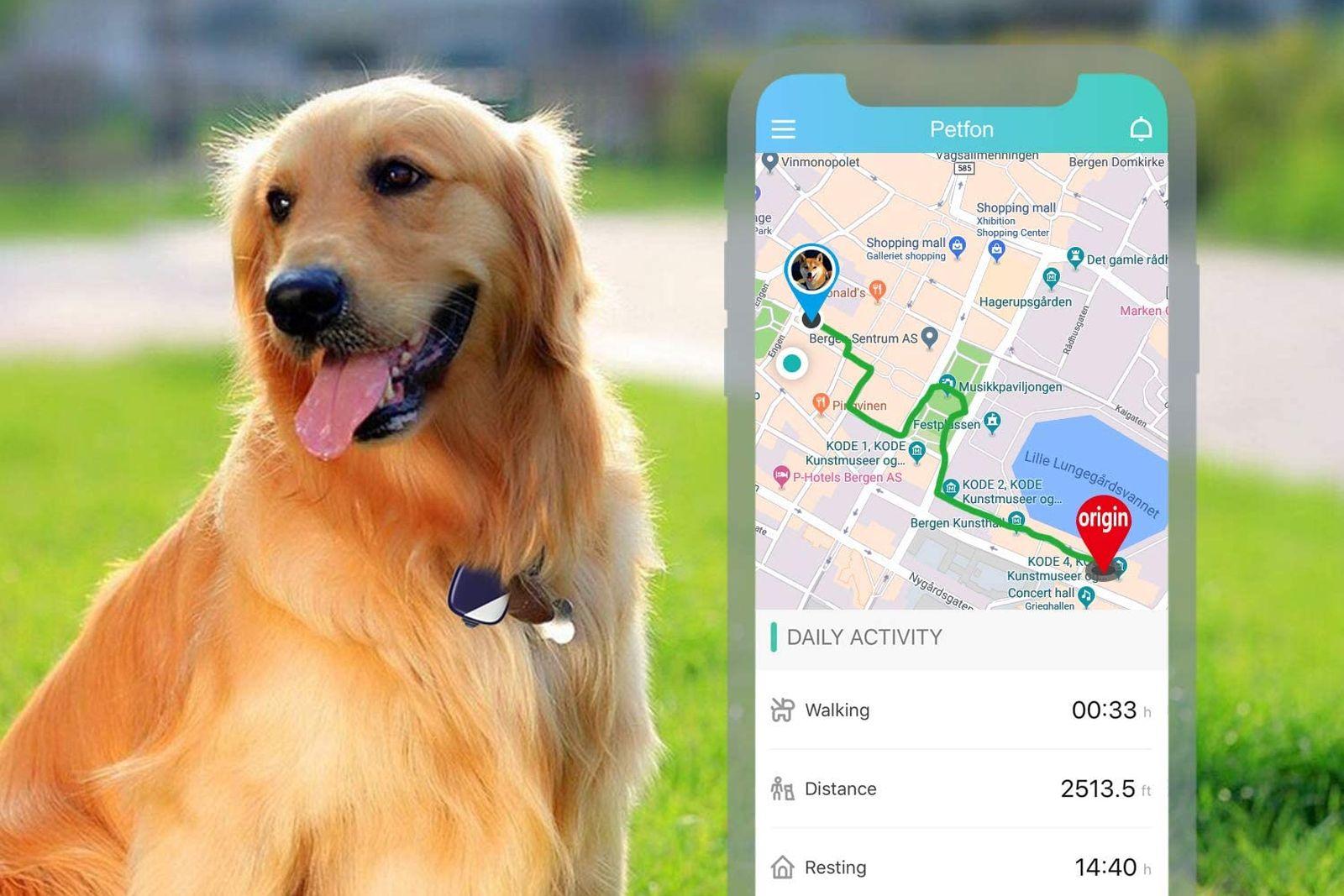 Los mejores rastreadores GPS para perros [year] (análisis) 1
