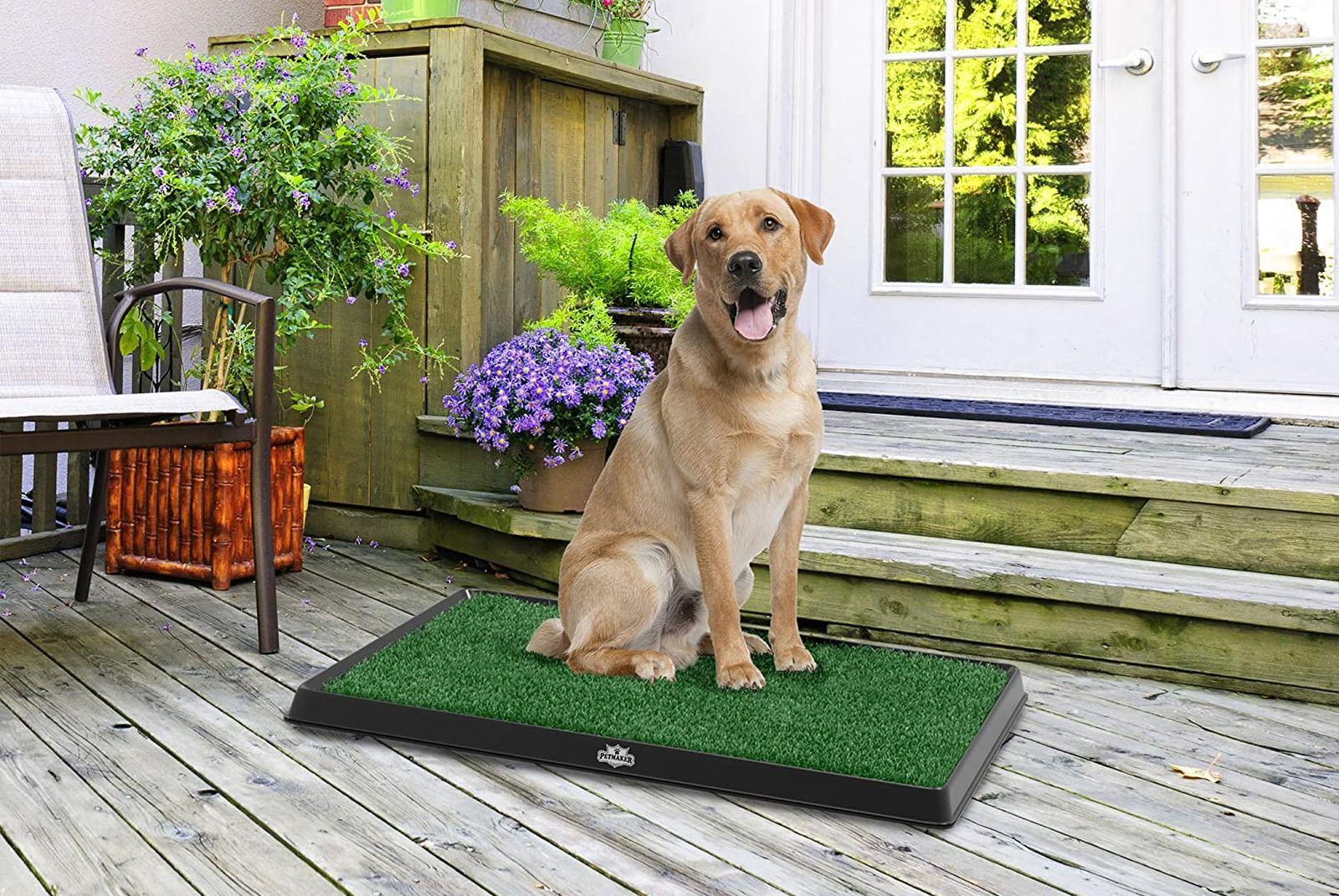 mejores inodoros para perros de interior