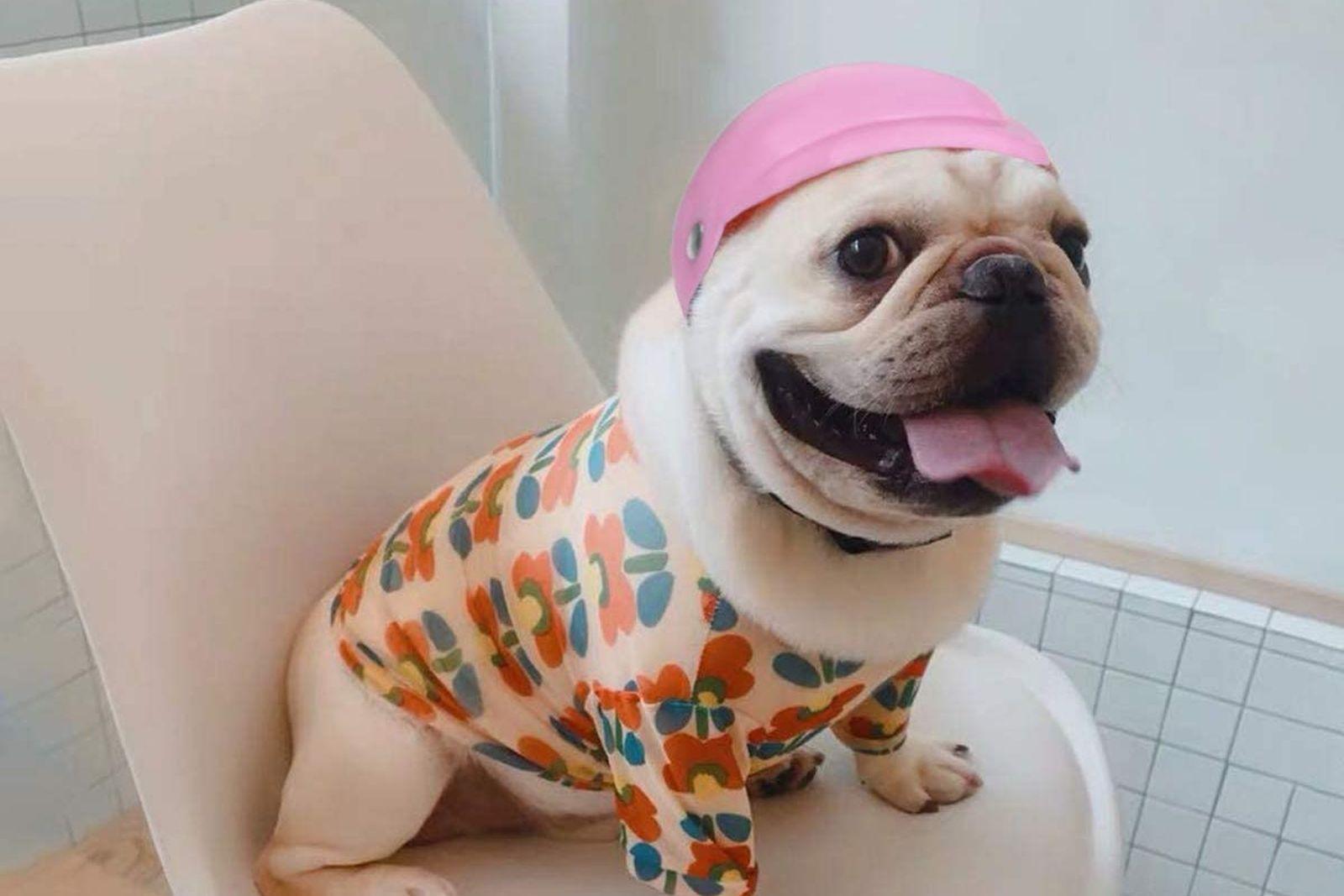 cascos para perros