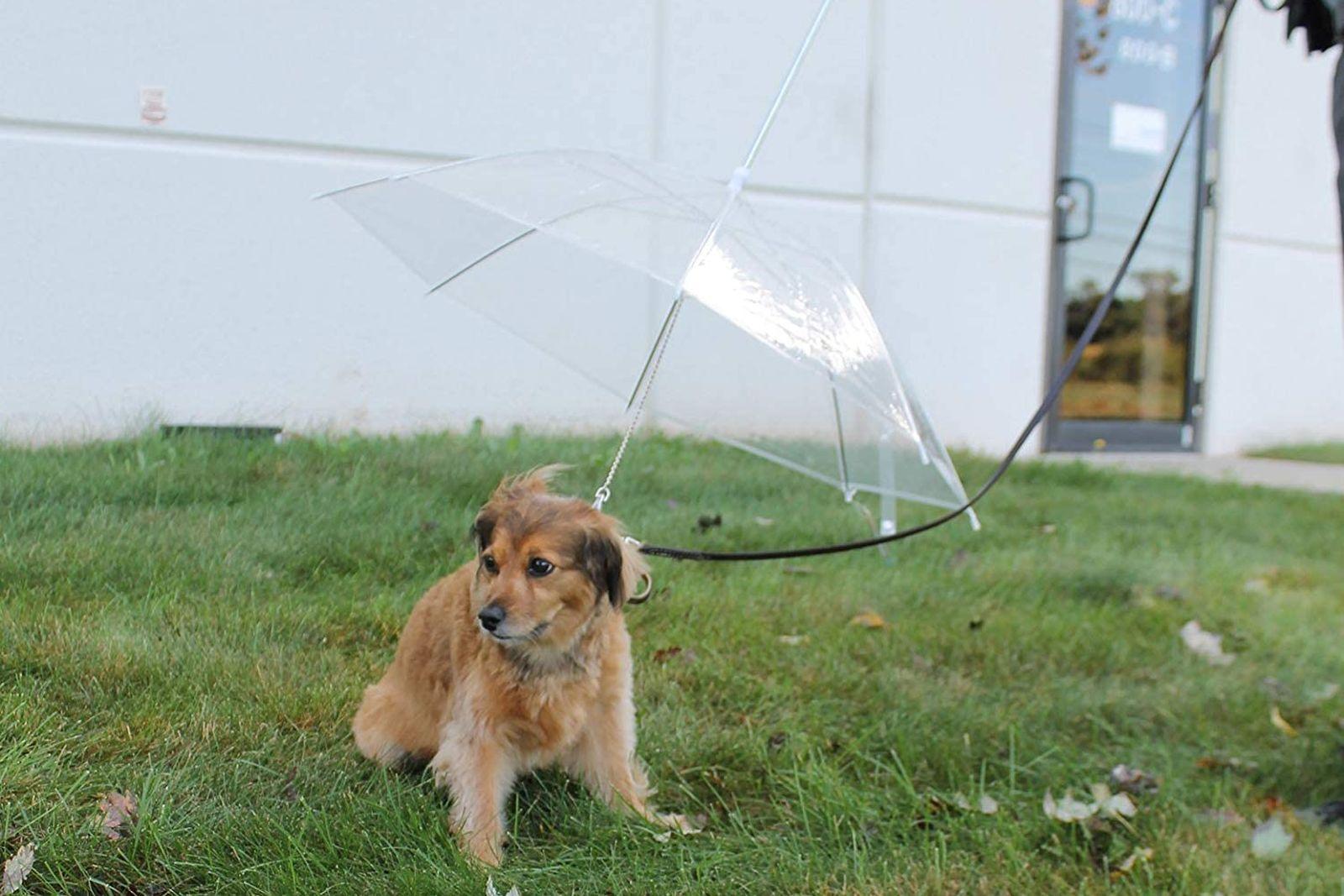 Los mejores paraguas para perros [year] (análisis) 1