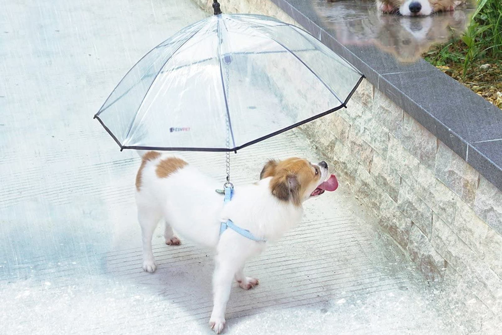 mejores paraguas para perros