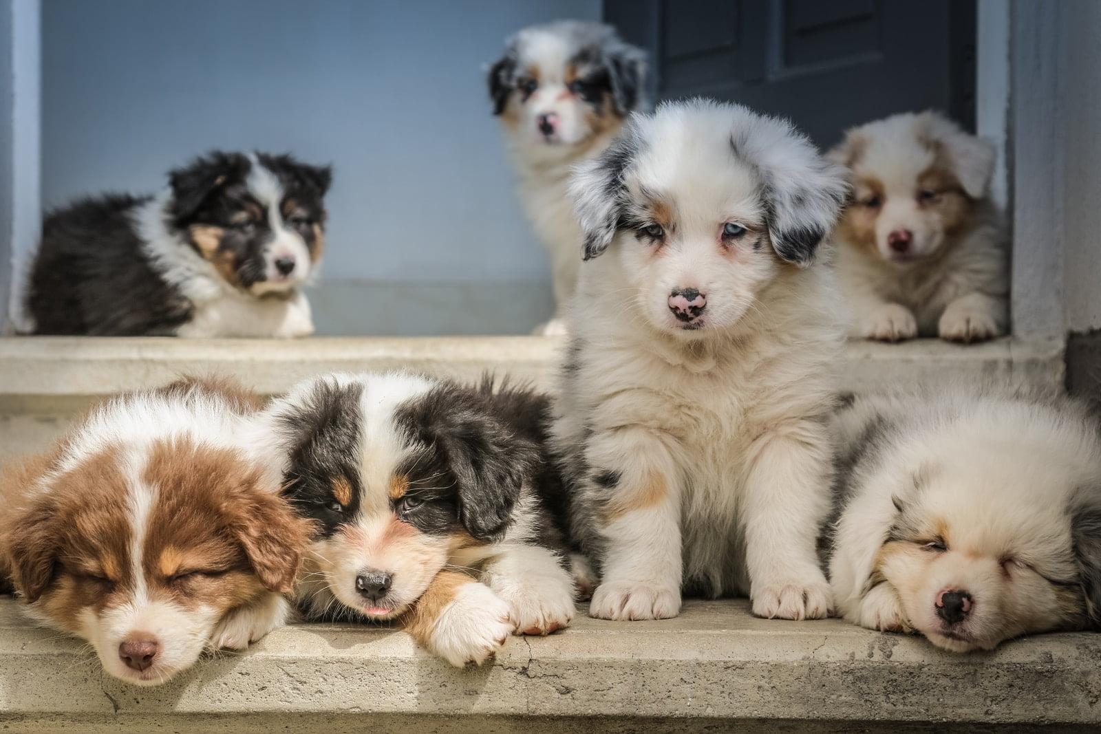 ¿Cuáles son los mayores mitos sobre los perros?