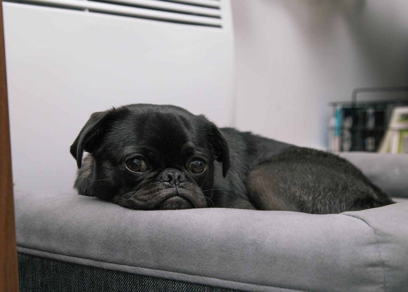 ¿Por qué los perros duermen con los ojos abiertos?